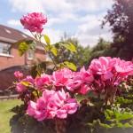 Our Garden In Summer